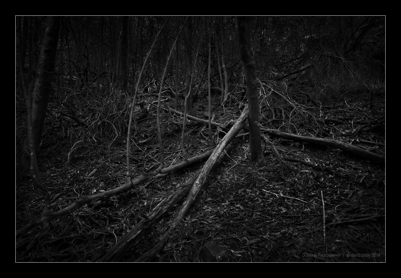 Darkness7.jpg