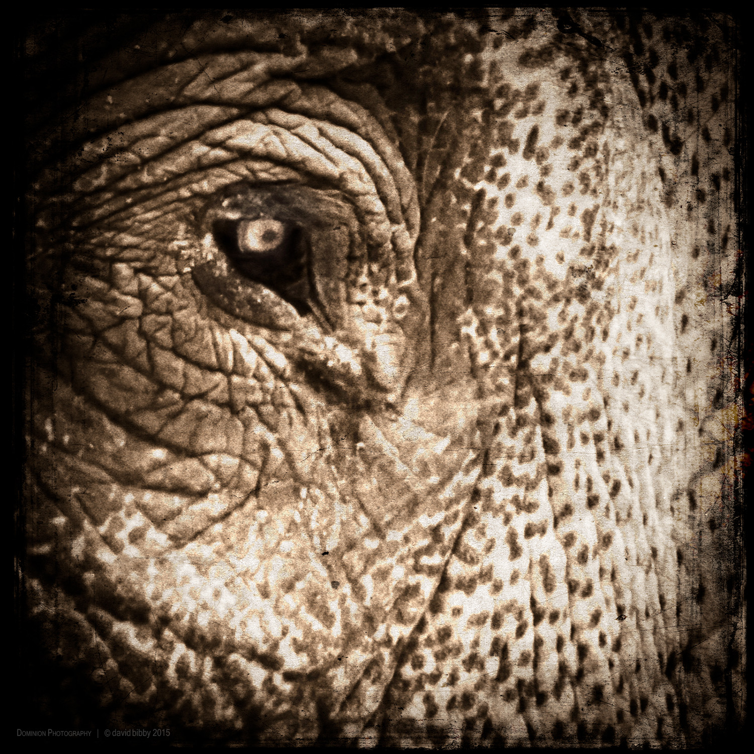 Guarding alertness   A crazy, untamed elephant in this world Cannot inflict such harm As the sufferings of the deepest hell Caused by the rampaging elephant of the mind;