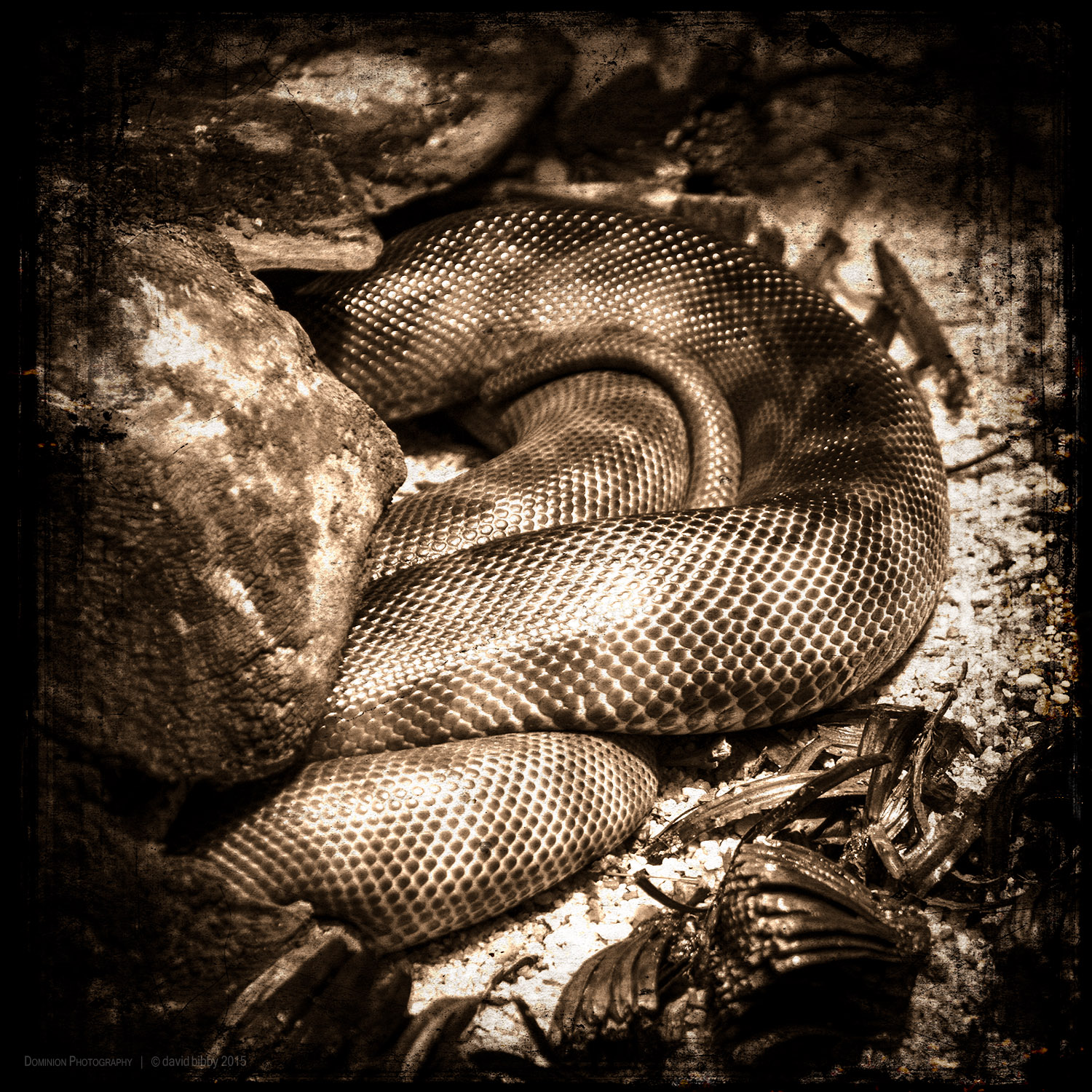 Relying upon effort   Therefore, just as I would jump up If a snake were to crawl into my lap, So, whenever sleep or laziness threaten, I will swiftly remove them from my mind.