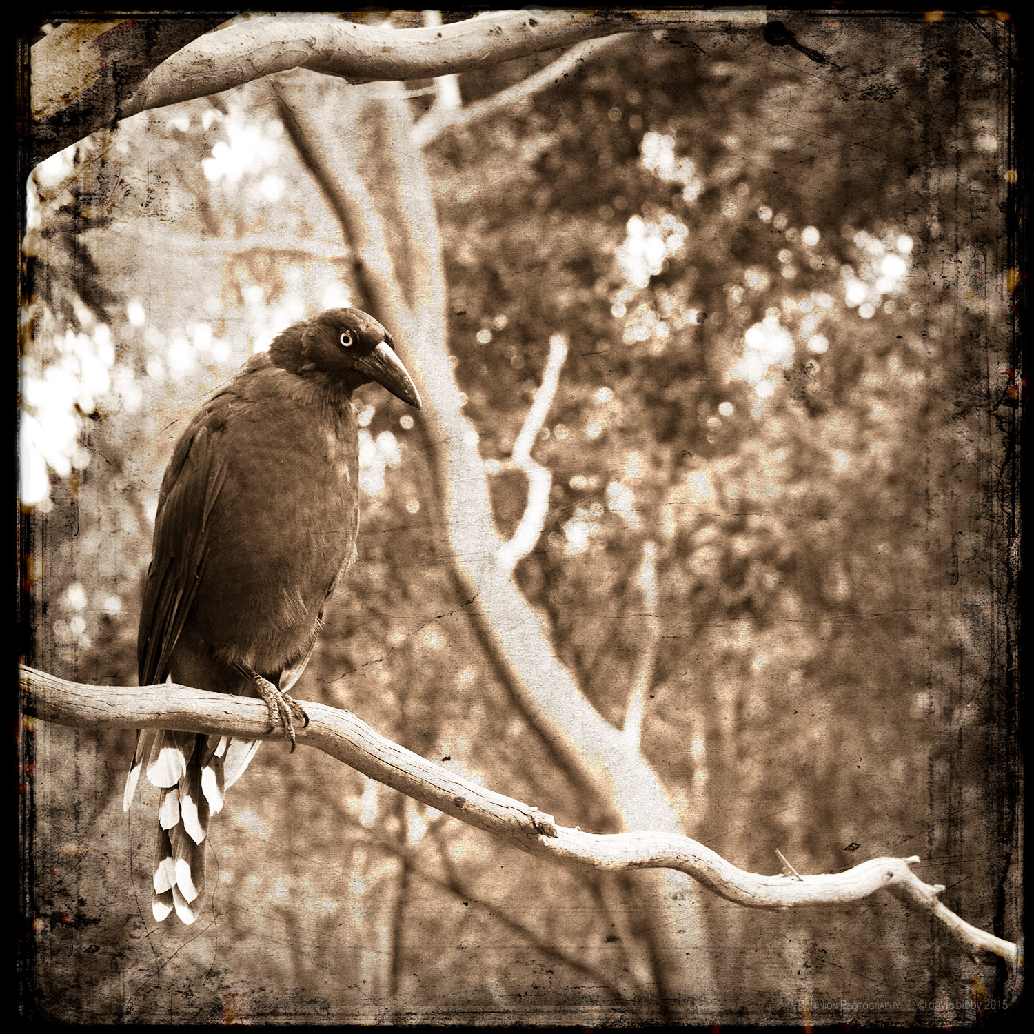 Relying upon effort   If a snake lies dying on the ground, Crows will act like brave eagles and attack it. In the same way, if my self-confidence is weak, Even the slightest adversity will be able to harm me.