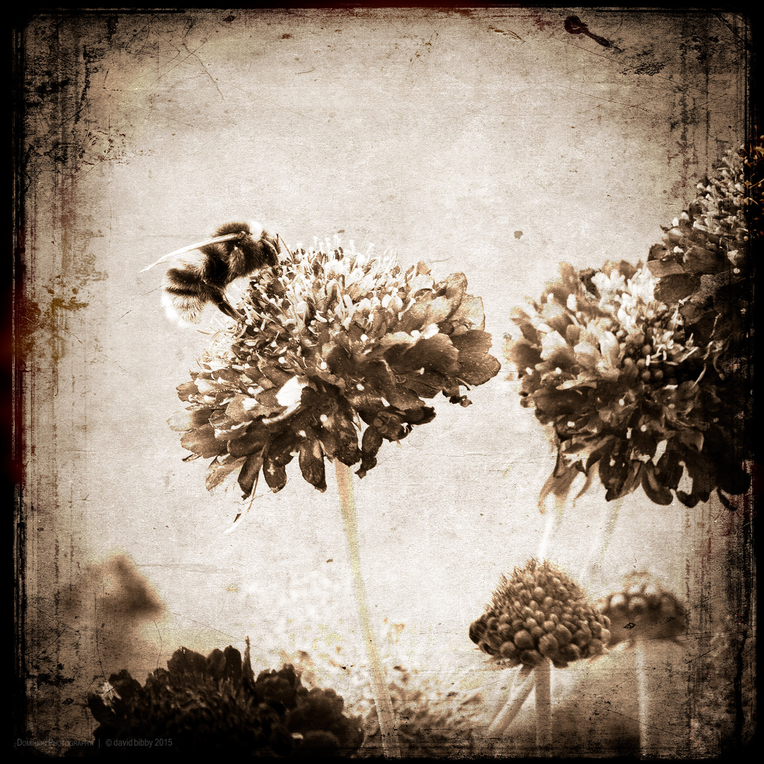 Relying upon mental stabilisation   Just as a bee takes pollen from a flower, So should I gather only what I need to sustain my practice And then, without clinging, return to abide in solitude As if I had never met anyone.