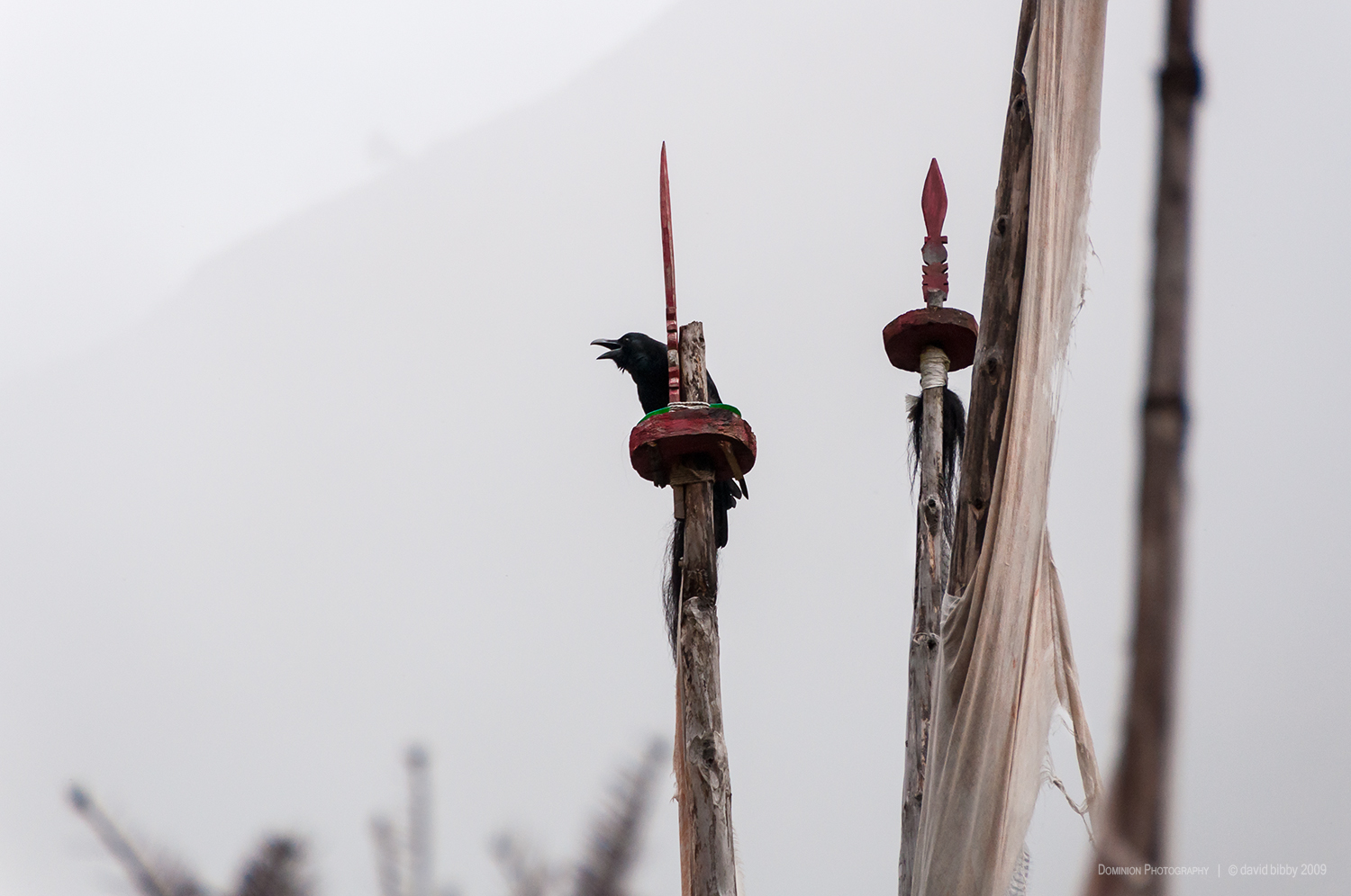 Misty morning  - Tibetan raven on prayer flags. Chebisa.