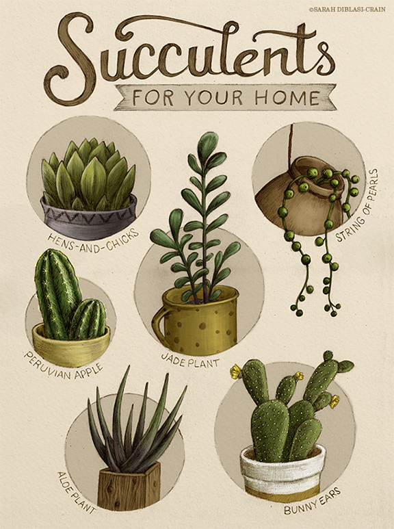 Succulent Chart