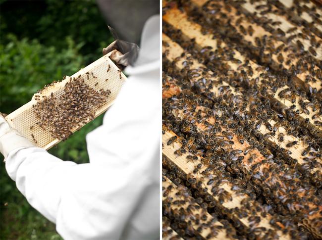 Beekeeper Hive Honey I Am Series Project Editorial Location Photography Richard Pardon Hertfordshire