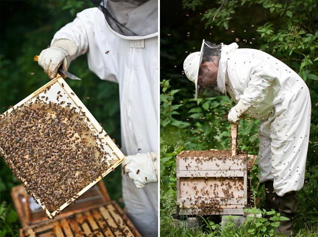 I Am Beekeeper Editorial Location Photography Richard Pardon Hertfordshire.jpg