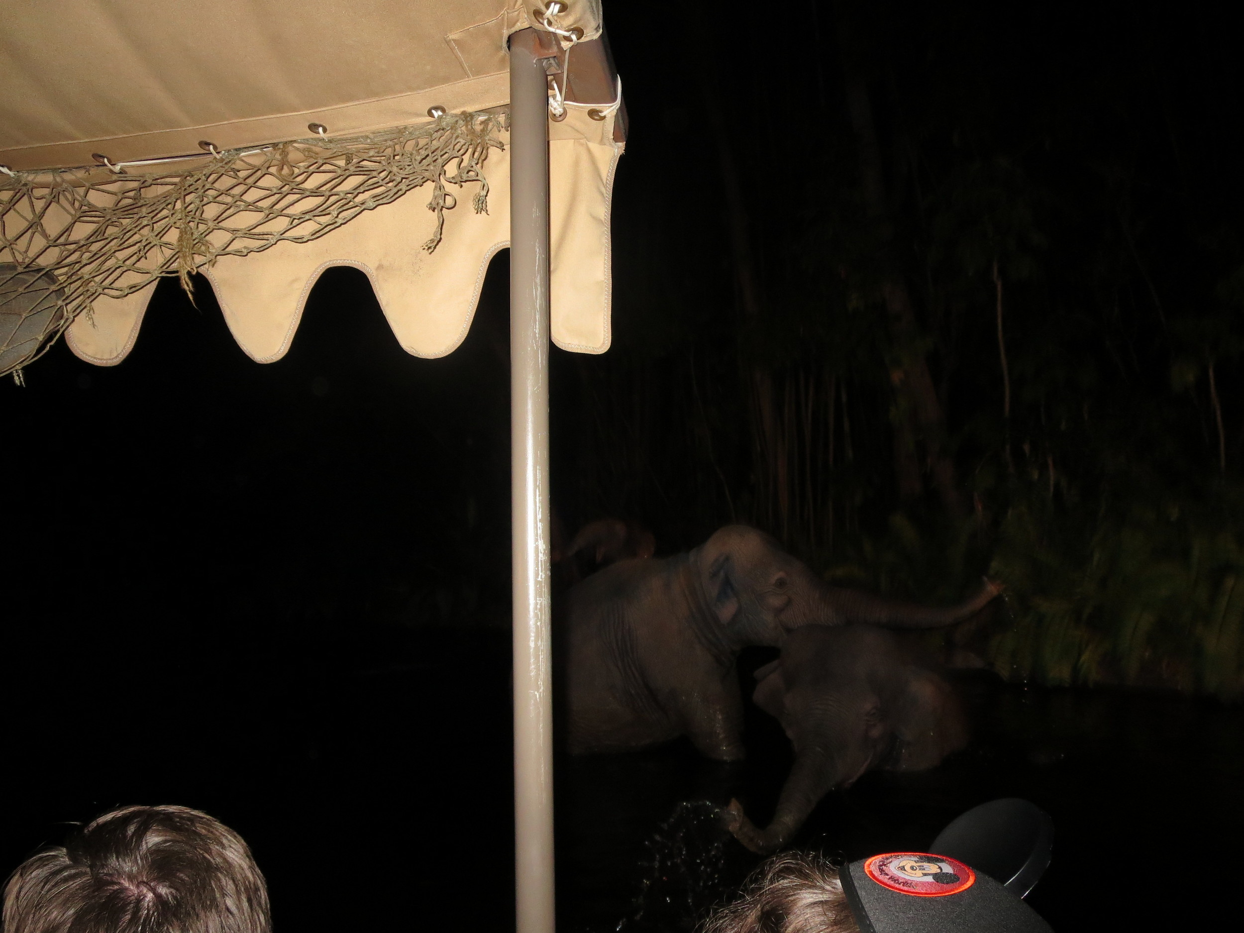 3:30 AM on the Jungle Cruise with a lot of devoted Disney fans