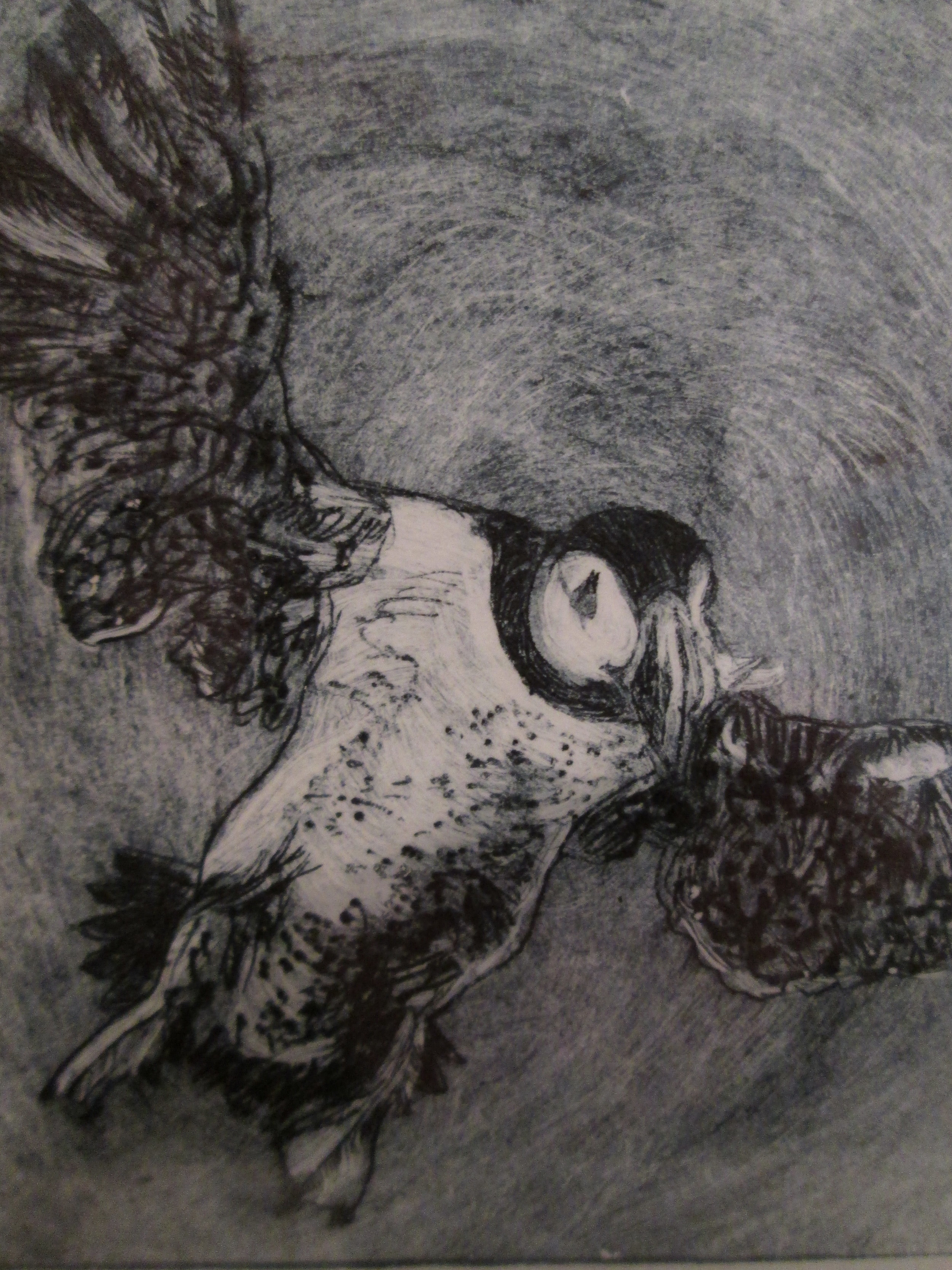 Louise Worthy 'in coming Puffin'  - 1 of 5 -  Original drypoint engraving - Framed £70.