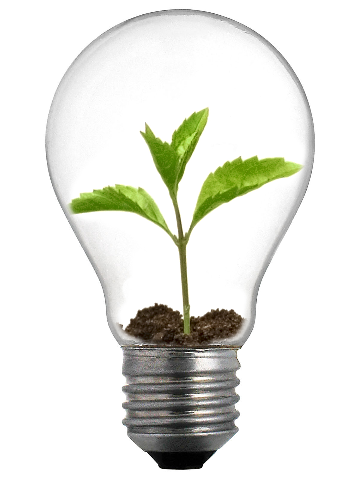 Sprout Lightbulb.jpg