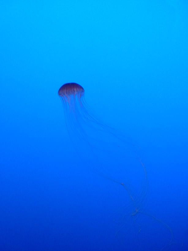 Laura Knight Studio  Textile Designer  Jellyfish