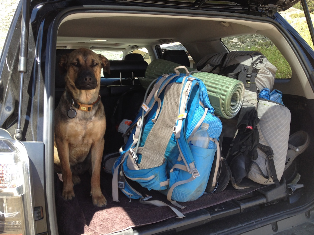 Indy guarding packs at Onion Valley