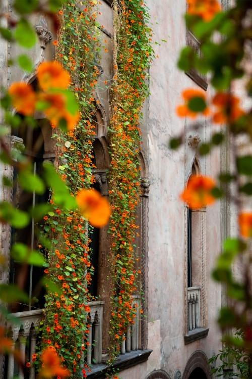 hanging-nasturtiums-siena-scarf-isabella-stewart-gardener-museum-gardenista.jpg