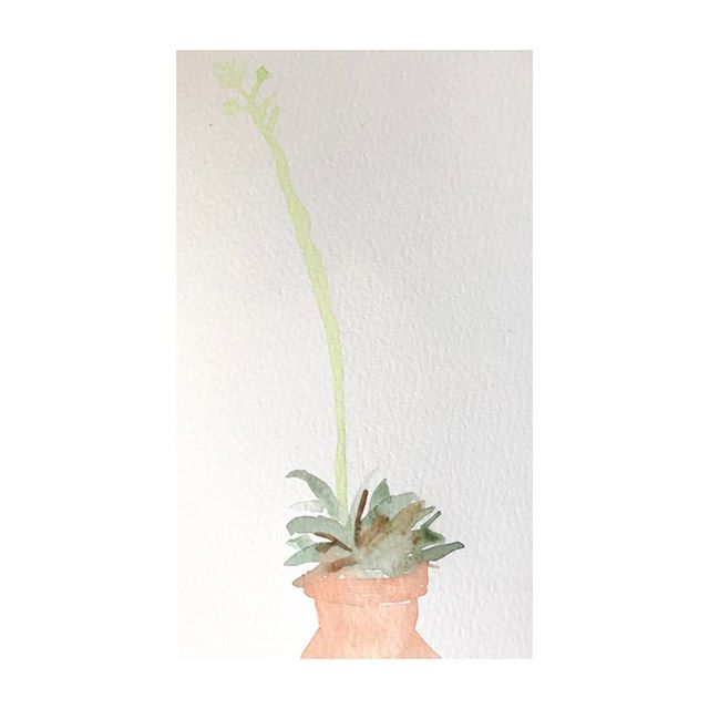 The little cactus that could. . . . #100beautifulthings #the100dayproject #100dayproject #first100days #womenwhodraw #watercolor #cactus