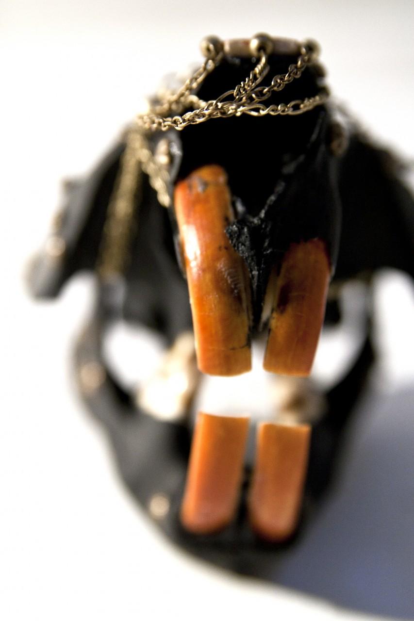 petra-shara-stoor-skull-art-gamavoraa-2.jpg