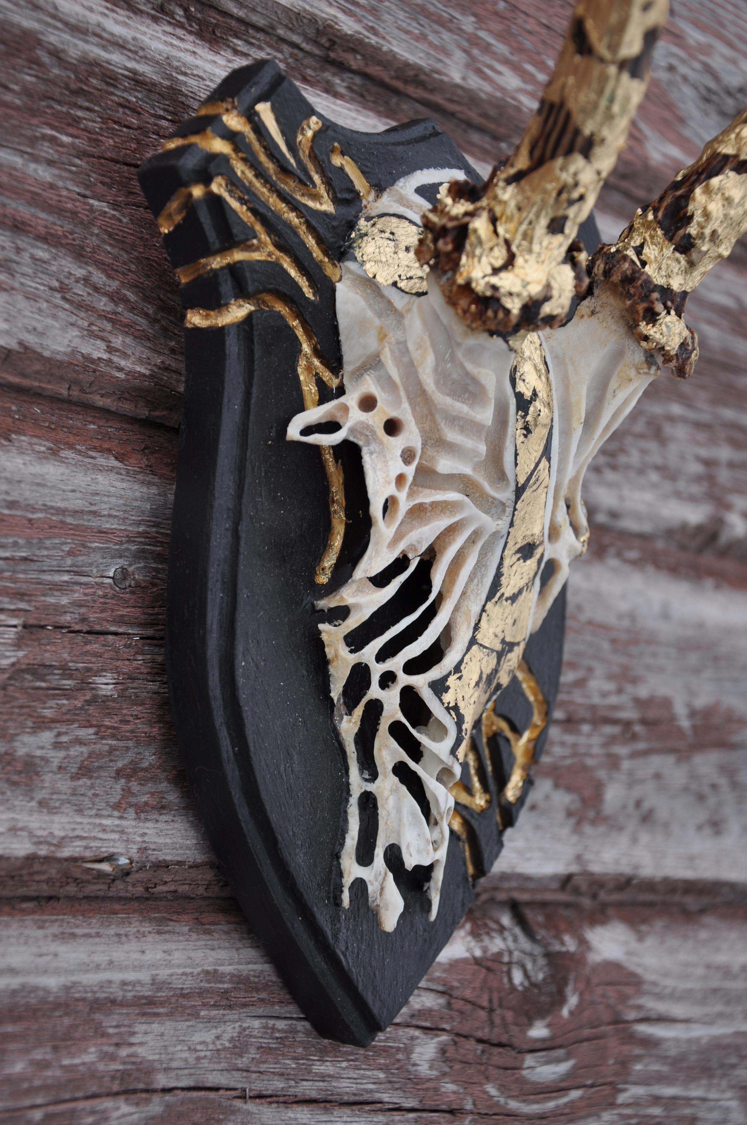 petra-shara-stoor-skull-art-nie-2.JPG