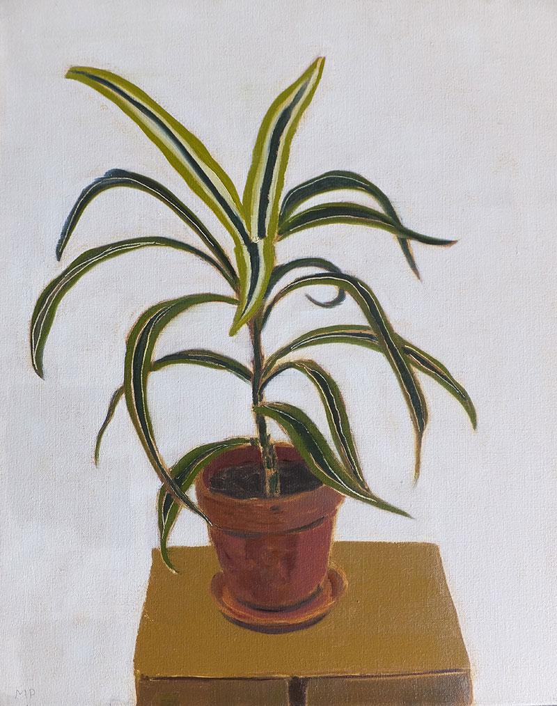 Scotty's Plant