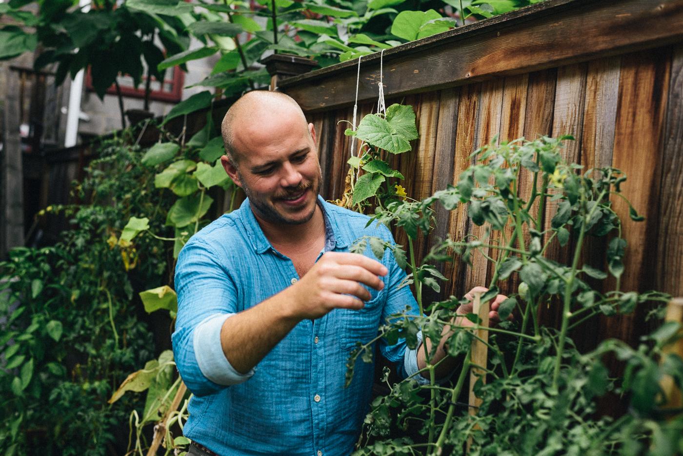 Chef Mathew Ramsey checks on heirloom tomato plants in his Washington, DC neighborhood.