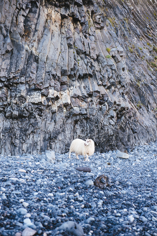 GoKateShoot-Iceland-67.jpg
