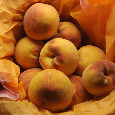 Peach season_©acfallen.png