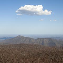 Mountain Pose 5 (Virginia)