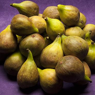 Fig Bounty_©acfallen.png