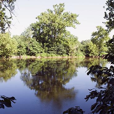 River tree_©acfallen.png