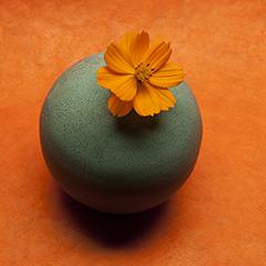 Orange 5 (Zinnia)