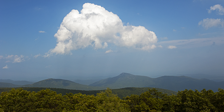 Long View 5 (Virginia Summer)
