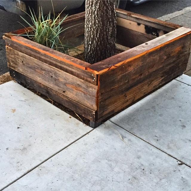 Redwood Tree Box