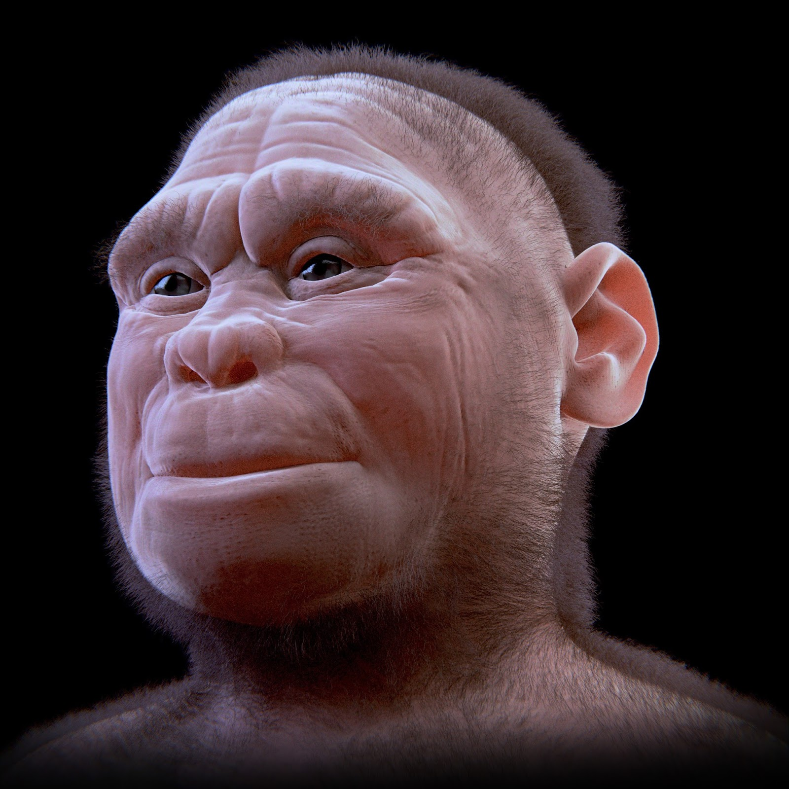 Homo floresiensis    from ATOR  (Arc-Team Open Research)