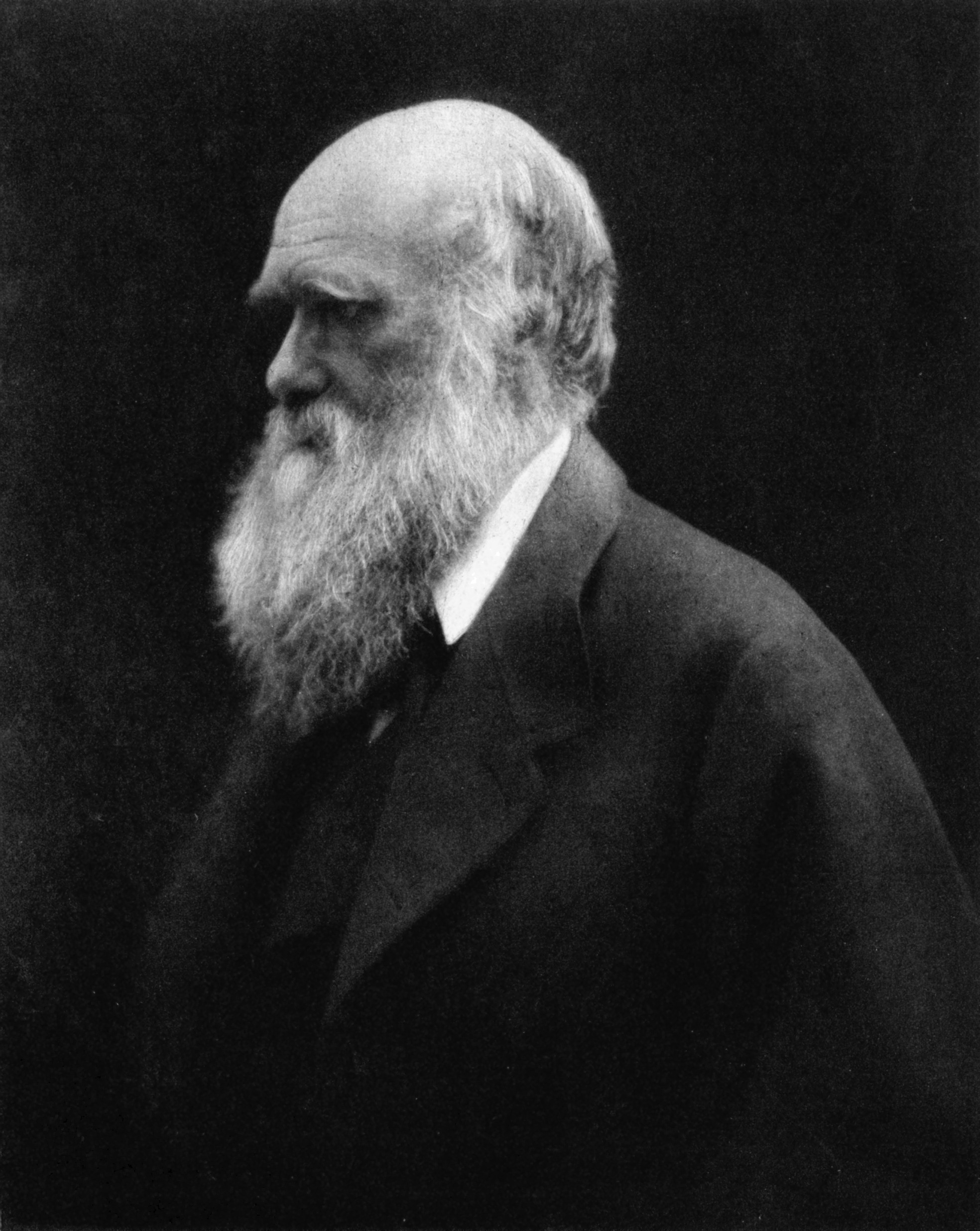 Charles Darwin  By Julia Margaret Cameron - Reprinted in Charles Darwin: His Life Told in an Autobiographical Chapter, and in a Selected Series of His Published Letters, edited by Francis Darwin. London: John Murray, Albemarle Street. 1892.Scanned by User:Davepape, Public Domain, https://commons.wikimedia.org/w/index.php?curid=3560761