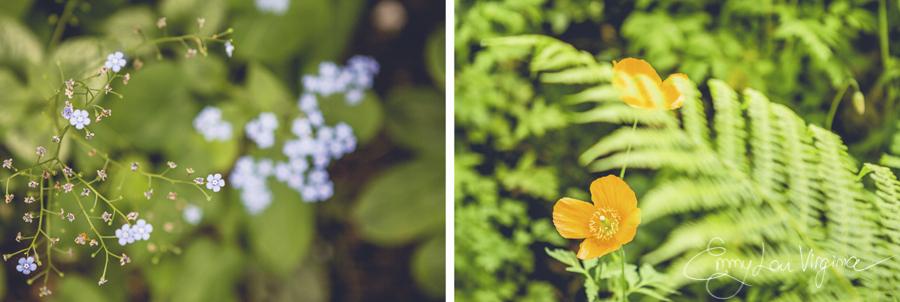 flowerma.jpg