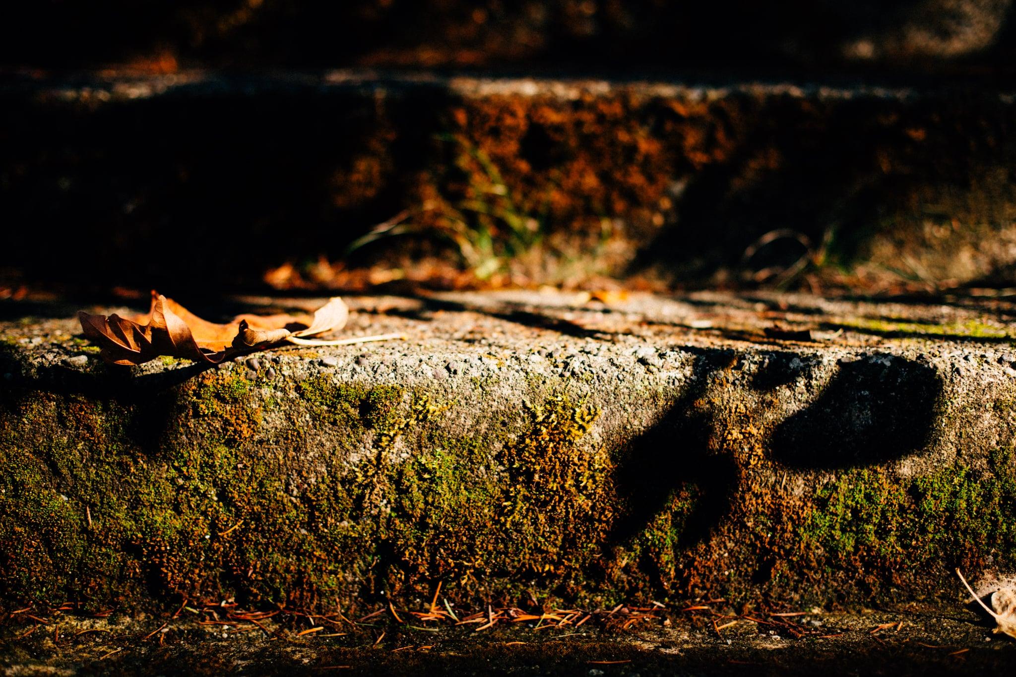 Vancouver Portrait Photographer - Emmy Lou Virginia Photography-37.jpg