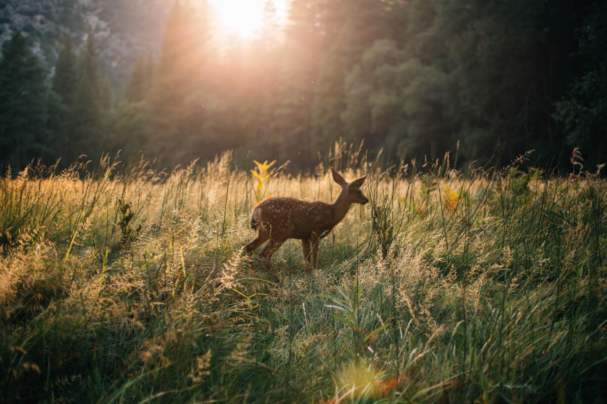 Vancouver Photographer - West Coast Road Trip-Emmy Lou Virginia Photography-73.jpg