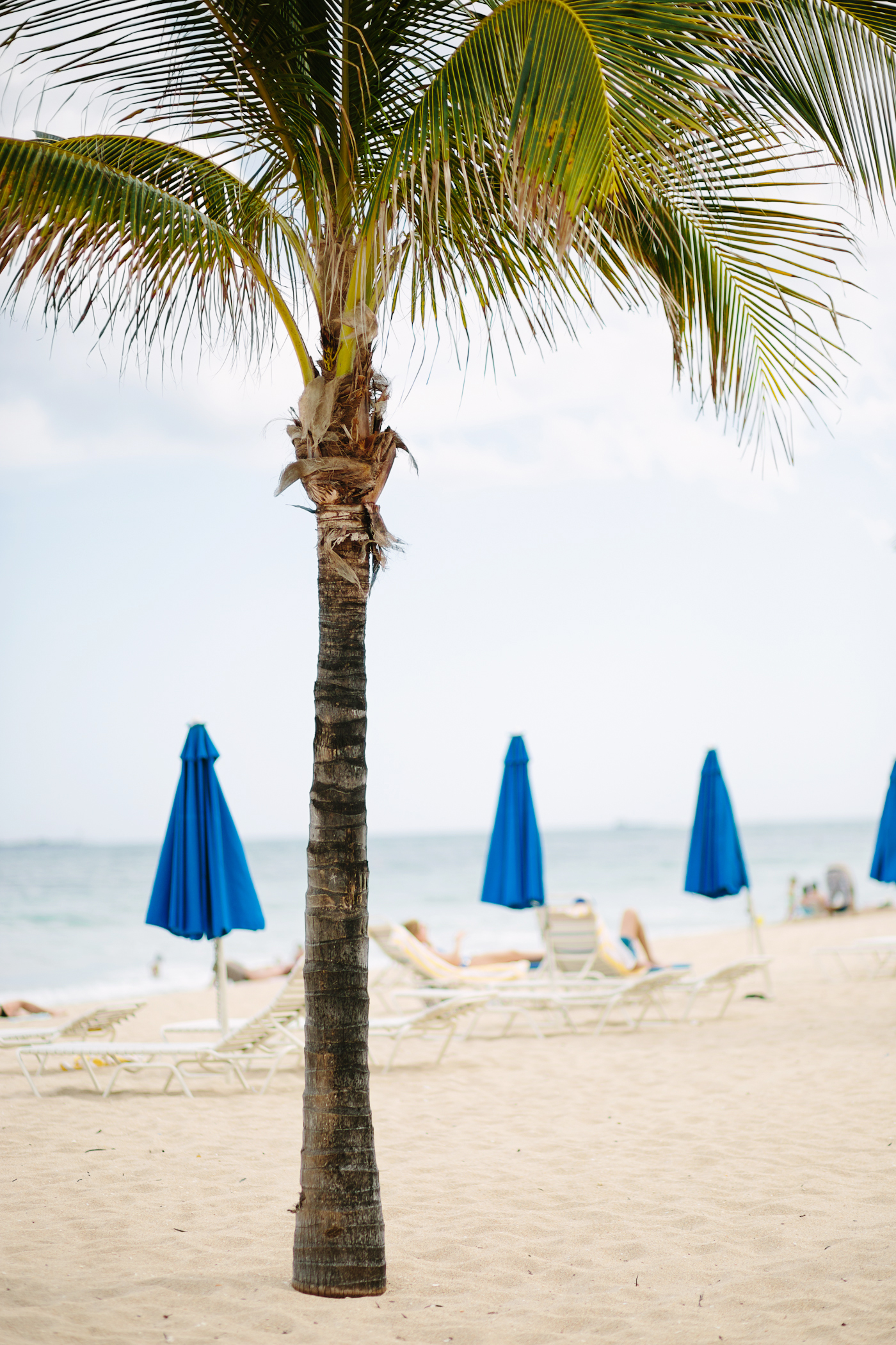 Palm Tree Blue Beach Umbrellas
