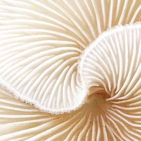 Inspiration #mushroom #macrophotography #inspiration #nature #design #perfection #beautiful #texture #pattern #love