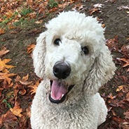 Laurie Cox - Owner of Unleashed BoardingLaurie has been walking dogs off-leash since 2007. She opened the doors to Unleashed Dog Camp in 2012. She built this business on the belief that our customers' dogs are family members and so we should view them as deserving of respect and loving care. She is a graduate of Seattle School of K9 Studies with a focus on animal learning theory and positive training techniques. Laurie has two dogs, Ripley and Walter. Ripley is a sweet ol' girl who doesn't roam with the group anymore, but she still has her favorite old time friends who have been coming to camp for years. Walter is a spicy chiweenie with lots of personality who loves every dog he meets!