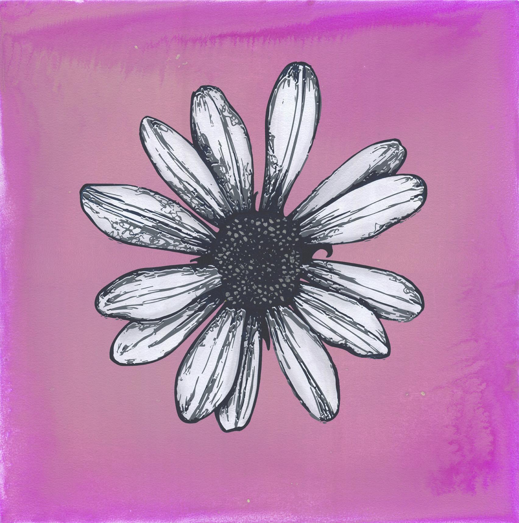 daisy pink Web LG.jpg