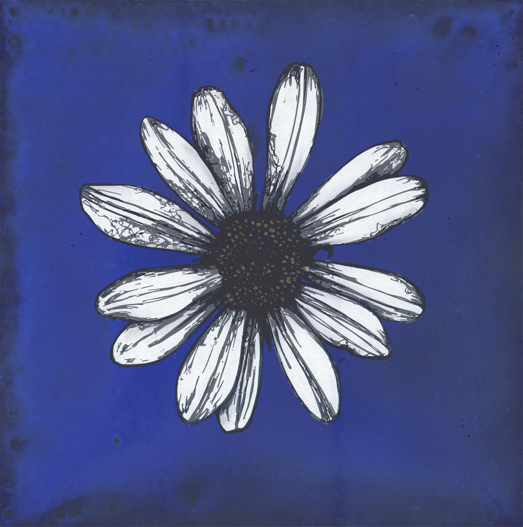 daisy blue Web LG.jpg