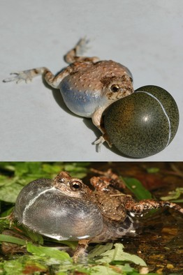 robofrog.jpg