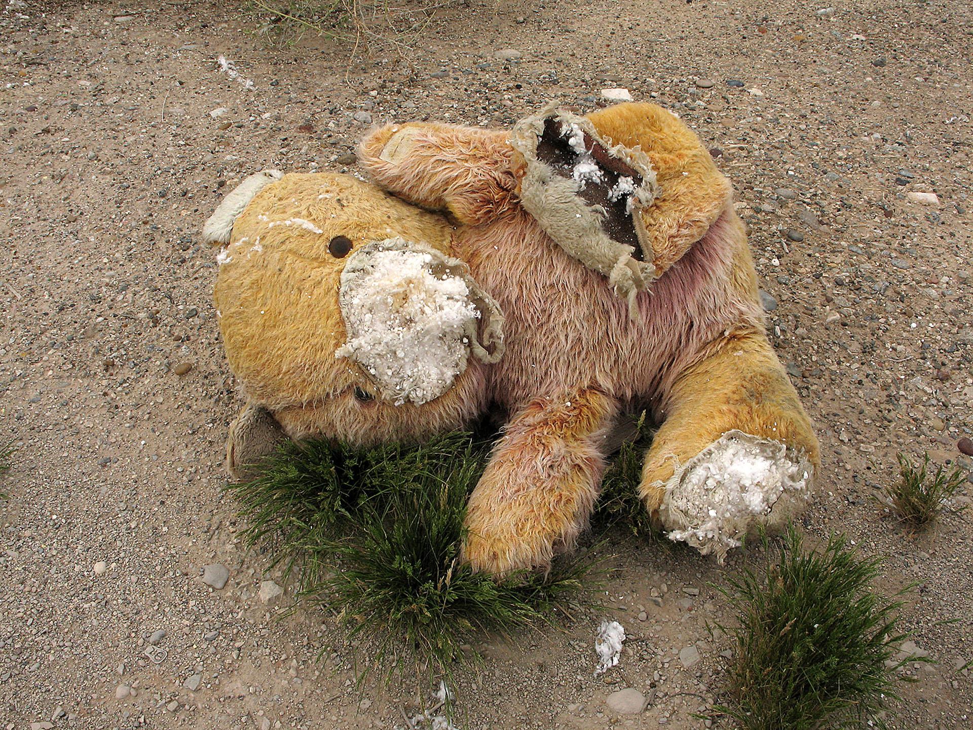 mar050142_mangled_bear.jpg