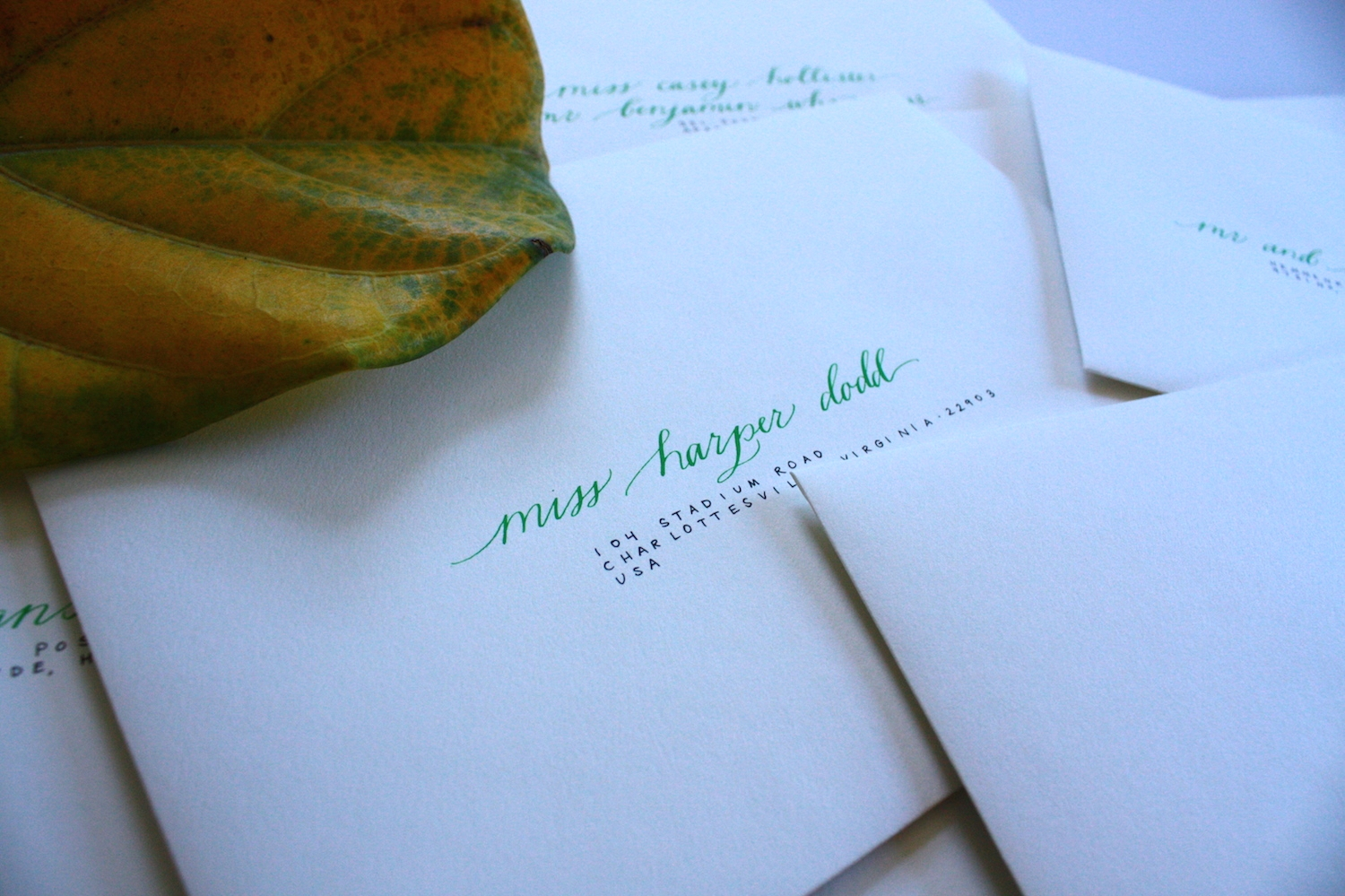 Envelopes with an old fiddle leaf fig / Bluestocking Calligraphy