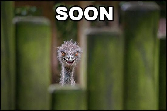 soon ostrich.jpg