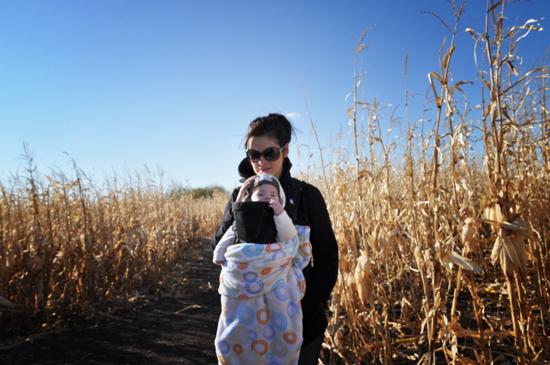 corn+maze+2011+-+5.jpg