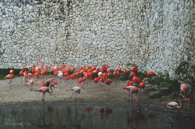 xcaret+park+flamingos.png