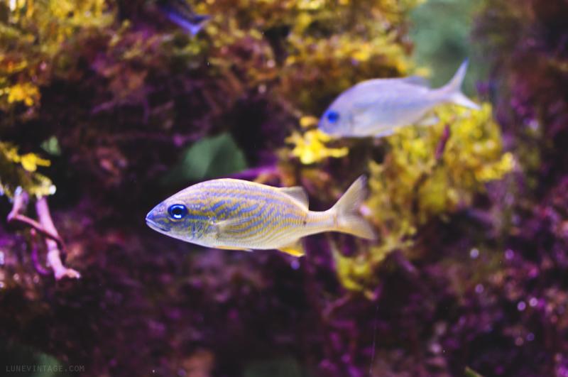 xcaret+park+aquarium+fish+1.png