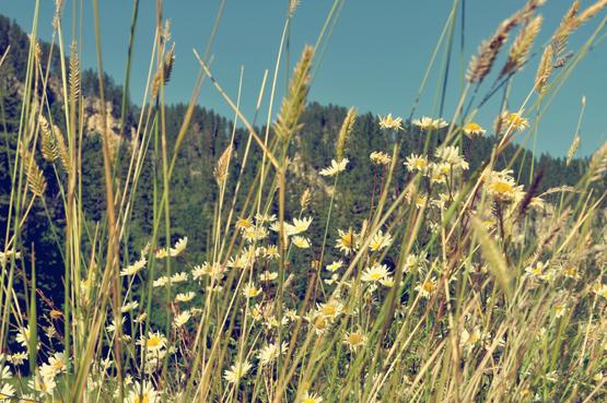 black+hills+forrest.jpg