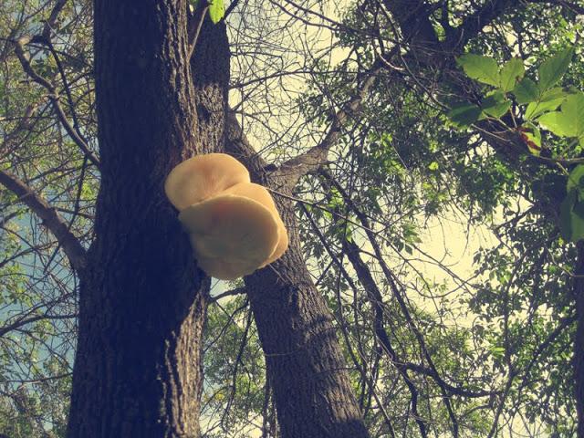 mushroomtree1.jpg
