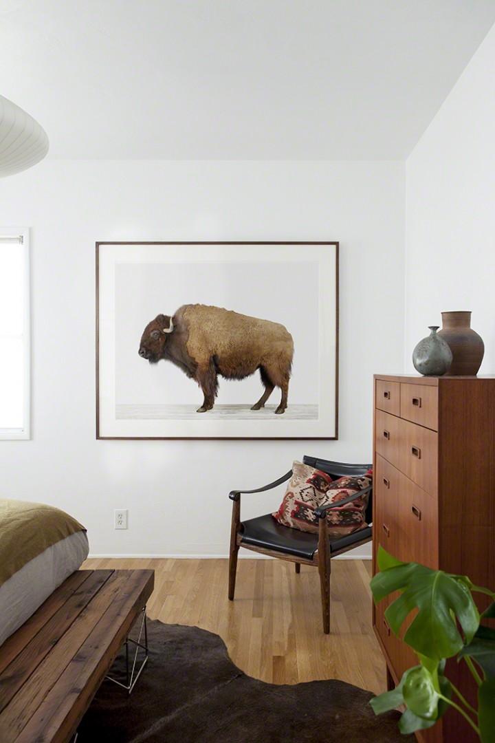 American-Buffalo_www.theanimalprintshop.com_-720x1080.jpg
