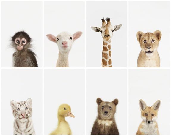 animal print shop little-darlings.jpg
