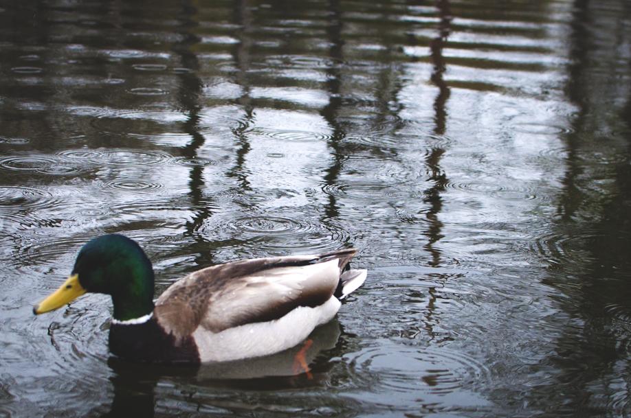 rainy day at the park - 8 (918x609).jpg